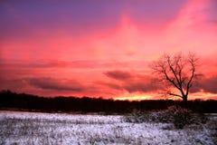 καθορισμένος χειμώνας ήλ& Στοκ Εικόνες