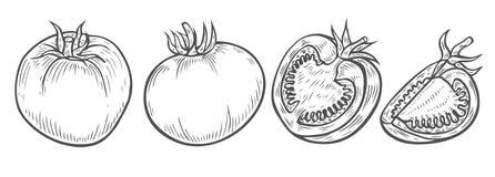 Καθορισμένο διάνυσμα φετών ντοματών στοκ φωτογραφίες