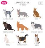 Καθορισμένο επίπεδο ύφος εικονιδίων φυλών γατών που απομονώνεται στο λευκό Δημιουργήστε τα INF απεικόνιση αποθεμάτων