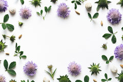 καθορισμένο λευκό τεσσάρων πλαισίων ανασκόπησης διαφορετικό floral Στοκ Φωτογραφία
