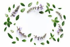 καθορισμένο λευκό τεσσάρων πλαισίων ανασκόπησης διαφορετικό floral Στοκ φωτογραφία με δικαίωμα ελεύθερης χρήσης