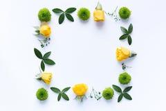 καθορισμένο λευκό τεσσάρων πλαισίων ανασκόπησης διαφορετικό floral Στοκ φωτογραφίες με δικαίωμα ελεύθερης χρήσης