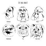 Καθορισμένο κεφάλι σκυλιών Στοκ Εικόνα