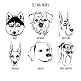 Καθορισμένο κεφάλι σκυλιών απεικόνιση αποθεμάτων