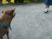 Καθορισμένο κοίταγμα αυτιών σκυλιών σουέτ Στοκ εικόνες με δικαίωμα ελεύθερης χρήσης