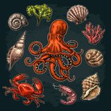 Καθορισμένο κοχύλι, κοράλλι, καβούρι, γαρίδες και χταπόδι θάλασσας διανυσματική απεικόνιση