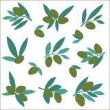 Καθορισμένο κλαδί ελιάς δέντρο απεικόνισης συνδετήρων ανθών τέχνης Στοκ εικόνα με δικαίωμα ελεύθερης χρήσης