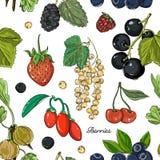 Καθορισμένο σχέδιο χρώματος μούρων Στοκ Εικόνες