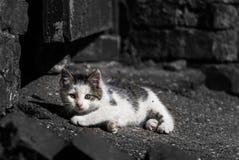 Καθορισμός γατακιών στοκ εικόνα