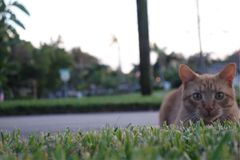 Καθορισμός γατών Στοκ εικόνες με δικαίωμα ελεύθερης χρήσης