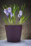 καθολικός Ιστός προτύπων σελίδων ίριδων χαιρετισμού λουλουδιών καρτών ανασκόπησης Στοκ εικόνα με δικαίωμα ελεύθερης χρήσης