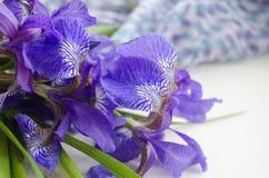 καθολικός Ιστός προτύπων σελίδων ίριδων χαιρετισμού λουλουδιών καρτών ανασκόπησης η ίριδα ανθοδεσμών ανασκόπησης απομόνωσε το λευ Στοκ εικόνες με δικαίωμα ελεύθερης χρήσης