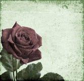 καθώς ανασκόπησης καρτών κόκκινος ρωμανικός αγάπης χαιρετισμού εστίασης πράσινος αυξήθηκε χρήσιμος βαλεντίνος συμβόλων Στοκ Εικόνες