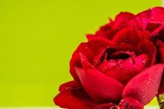 καθώς ανασκόπησης καρτών κόκκινος ρωμανικός αγάπης χαιρετισμού εστίασης πράσινος αυξήθηκε χρήσιμος βαλεντίνος συμβόλων Στοκ εικόνα με δικαίωμα ελεύθερης χρήσης