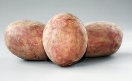 Καινούρια πατάτα Στοκ Εικόνα