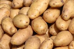 Καινούριες πατάτες Στοκ Φωτογραφίες