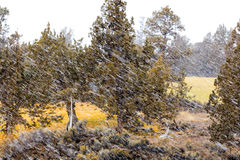 Καιρικές συνθήκες χιονοθύελλας Στοκ εικόνα με δικαίωμα ελεύθερης χρήσης