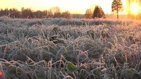 Καιρικός προβλέποντας ή πρώτη ημέρα του χειμώνα φιλμ μικρού μήκους