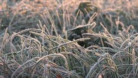 Καιρικός προβλέποντας ή πρώτη ημέρα του χειμώνα απόθεμα βίντεο