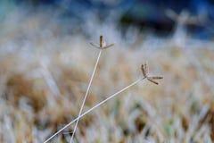Και το δύο λουλούδι της χλόης Στοκ εικόνες με δικαίωμα ελεύθερης χρήσης