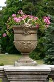κακά λουλούδια κύπελλ&omeg στοκ φωτογραφίες