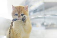 Κακή γάτα Στοκ Φωτογραφία