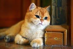 Κακή διάθεση γατών Στοκ Εικόνες