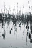 κακή οικολογία Στοκ φωτογραφίες με δικαίωμα ελεύθερης χρήσης
