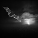 Κακός και θύελλα Στοκ Εικόνες