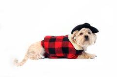 κακό μεγάλο σκυλί Στοκ εικόνα με δικαίωμα ελεύθερης χρήσης