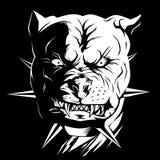 Κακό πίτμπουλ σκυλιών ελεύθερη απεικόνιση δικαιώματος