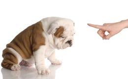 κακό σκυλί Στοκ φωτογραφία με δικαίωμα ελεύθερης χρήσης