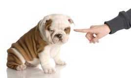 κακό σκυλί στοκ εικόνες