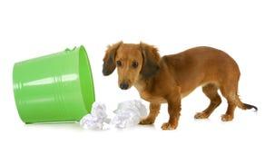 Κακό σκυλί στοκ φωτογραφίες με δικαίωμα ελεύθερης χρήσης