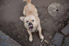 κακό σκυλί Στοκ Εικόνα