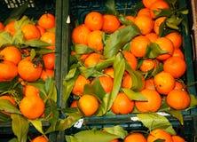 Καλάθια και ράφια tangerines μέσα σε ένα κατάστημα επίδειξη πολλών μικρών γλυκών, ώριμων, πορτοκαλιών εσπεριδοειδών, έτοιμων ναφα στοκ φωτογραφία με δικαίωμα ελεύθερης χρήσης