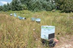 Καλάθια κυψελών στον τομέα στοκ φωτογραφία με δικαίωμα ελεύθερης χρήσης