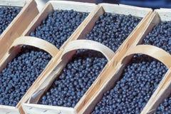 Καλάθια των βακκινίων στην αγορά τροφίμων οδών αγροτών Στοκ Εικόνες