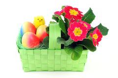 Καλάθι αυγών Πάσχας με τα ζωηρόχρωμα αυγά κοτόπουλου και ρόδινο primrose Στοκ εικόνες με δικαίωμα ελεύθερης χρήσης