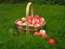 καλάθι μήλων στοκ φωτογραφία
