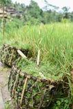 Καλάθι ρυζιού της Farmer Στοκ φωτογραφίες με δικαίωμα ελεύθερης χρήσης