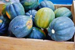 Καλάθι της πράσινης και πορτοκαλιάς κολοκύνθης βελανιδιών το φθινόπωρο στοκ φωτογραφία