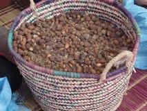 Καλάθι argan των καρυδιών που χρησιμοποιούνται για την προετοιμασία argan του πετρελαίου σε Essaouira, Μαρόκο Στοκ Εικόνες
