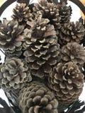 Καλάθι Pinecones στοκ εικόνες με δικαίωμα ελεύθερης χρήσης