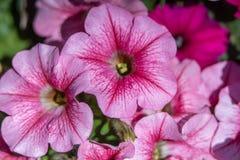 Καλά ζωηρόχρωμα λουλούδια Στοκ Εικόνες