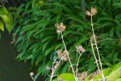 Καλά ξηραμένα από τον ήλιο λουλούδια, που στέκονται σε αντίθεση με ένα πολύβλαστο πράσινο, ταϊλανδικό πάρκο κήπων Στοκ φωτογραφίες με δικαίωμα ελεύθερης χρήσης