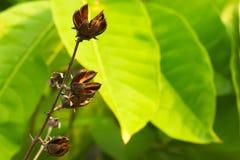 Καλά ξηραμένα από τον ήλιο λουλούδια, που στέκονται σε αντίθεση με ένα πολύβλαστο πράσινο, ταϊλανδικό πάρκο κήπων Στοκ Εικόνα