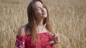 Καλή νέα γυναίκα που απολαμβάνει τη φύση και το φως του ήλιου στον τομέα σίτου στις απίστευτες ζωηρόχρωμες ακτίνες ήλιων Χαριτωμέ φιλμ μικρού μήκους