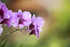 Καλή ορχιδέα, συμπαθητικό λουλούδι Στοκ φωτογραφίες με δικαίωμα ελεύθερης χρήσης