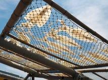 Καλαμάρια στο δίχτυ Στοκ Εικόνα